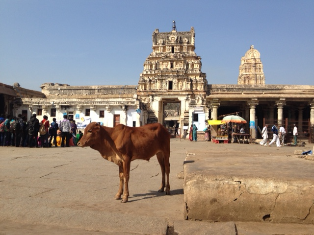 Hampi-Temple-Cow